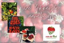 Aardbeienkwekerij Van de Riet